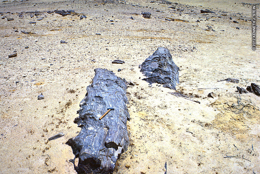Ancient Egypt wasn't always a desert environment. Many years ago, some of it was forest or forested wetland and its petrified forests are proof of this. One of these ancient forests is located outside of Cairo in the Eastern Sahara desert.