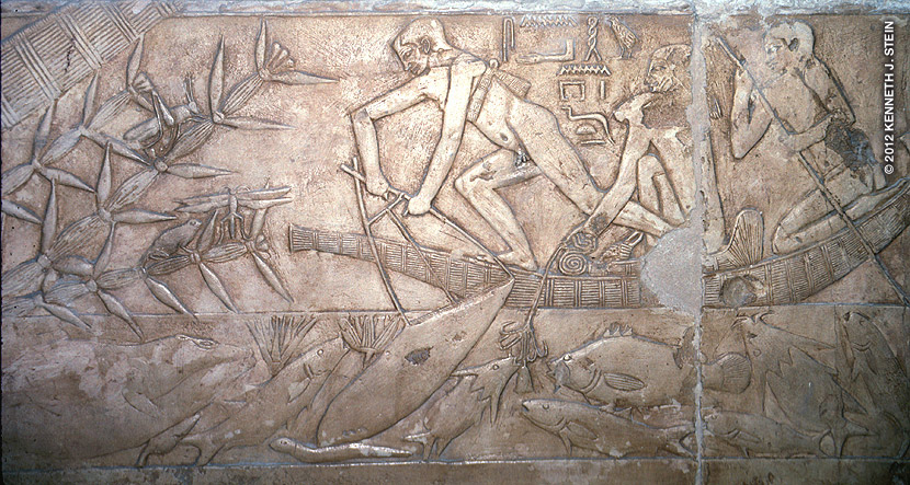 Kagemni was a vizier during the time of King Djoser (2649 BC). Men fish from a papyrus boat. One man fishes with a multi-hooked line; another holds a landing net. Fish species in this scene include: carp, mullet, catfish, upside-down catfish, elephant fish, tilapia, Nile perch, and eel. On the left side of the panel - note the frog and grasshopper resting on Shining Pondweed (Potamogeton lucens) that is still found throughout the Nile today.