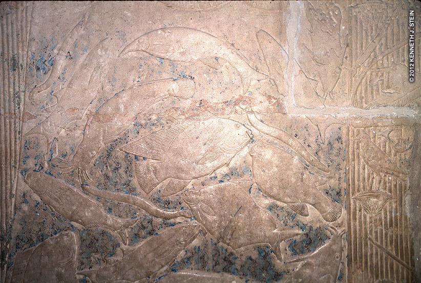 Mereruka was a vizier to the Pharaoh Teti (2323 BC). Fish species include: Tilapia, eels, puffer fish, catfish, elephant fish, mullet, carp, Nile perch, upside-down catfish, and moonfish.